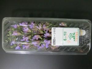 6月・セージの花