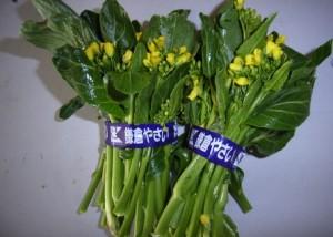 208.小松菜の菜の花jpg