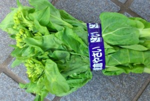 256・白菜の菜の花