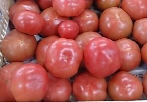 252・桃太郎トマト