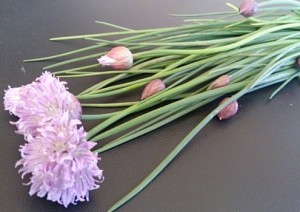 41・シブレットの花